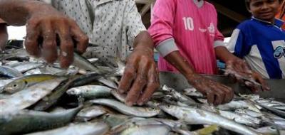 El cambio climático está achicando a los peces