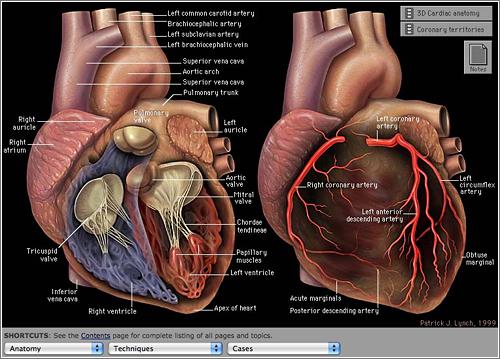 Un mejor ambiente de trabajo disminuye el número de infartos
