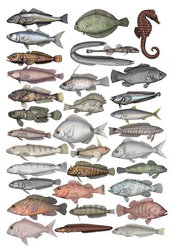 Simposio: Sistemas sensoriales de los peces: estructura, función, desarrollo, plasticidad y evolución